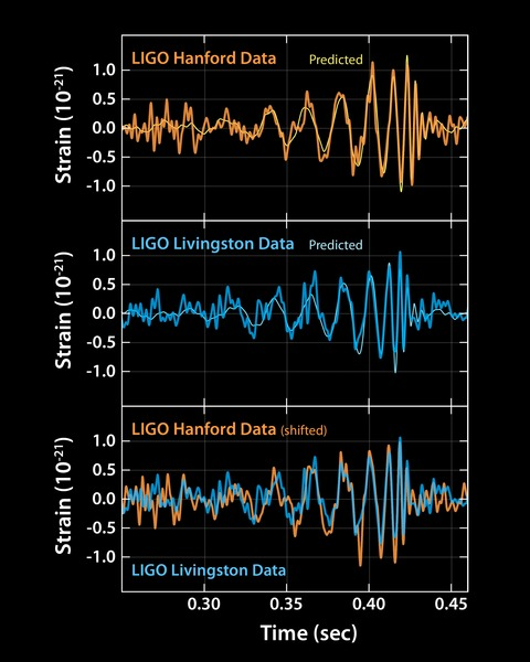 Signal observed by each LIGO detector.